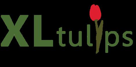 XL Tulips
